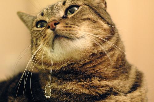 Пена изо рта! - когда у кота идет пена изо рта